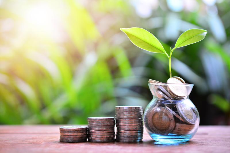 Растение в вазе с монетами